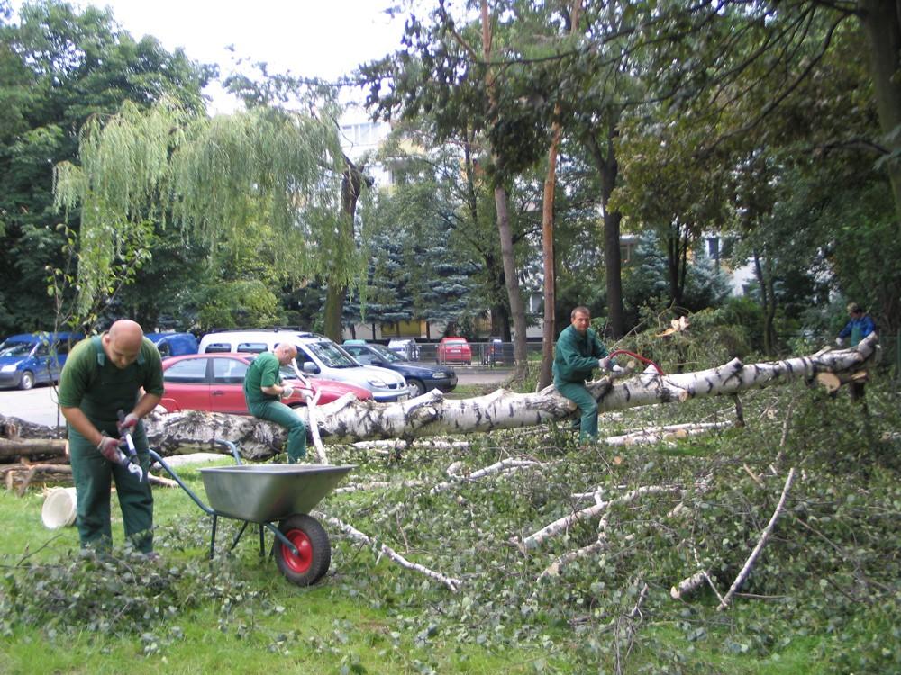 pracownicy prac technicznych podczas usuwania drzewa